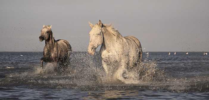 Horses_702x336_Startupper_02